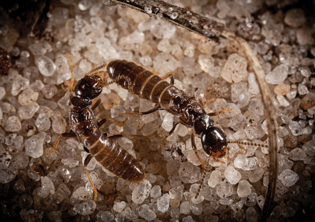 Gunter Pest & Lawn offers the best Kansas City Pest Control which includes the best Kansas City Termite Exterminators