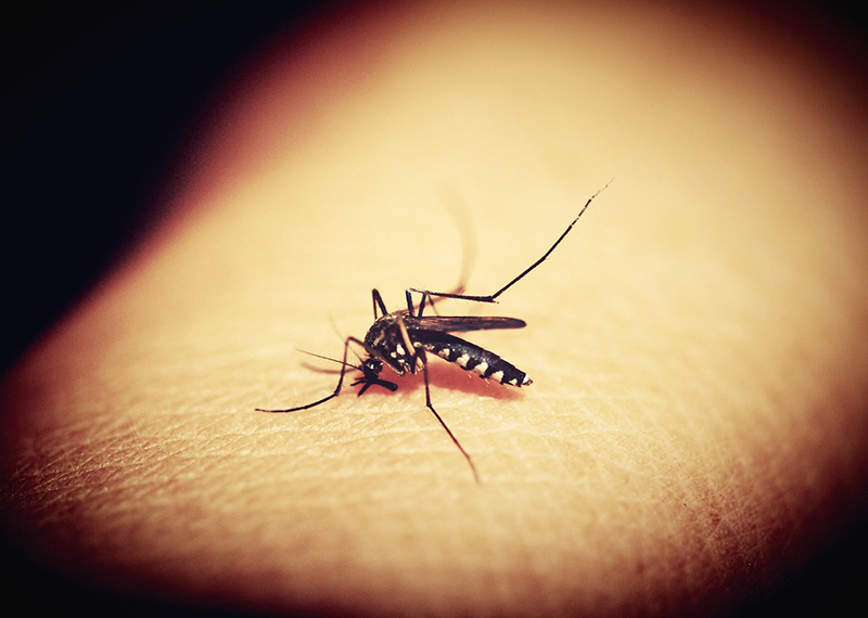 Mosquitos are one of the most dangerous bugs to be on the lookout for and to get rid of in the Kansas City area.