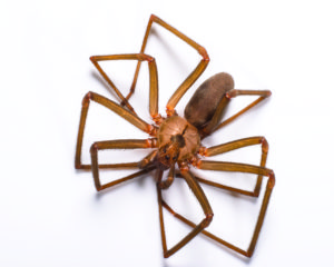 Gunter Pest & Lawn are the top spider exterminators in the Kansas City Area.