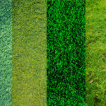 Take a look at these grass types and get your yard ready for the spring.