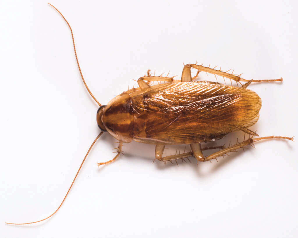 Unfortunately cockroaches live through the winter and require extermination in the spring.