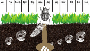 How to Identify and Get Rid of Lawn Pests? Learn More