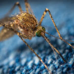 Learn How to Protect Yourself and Your Home from Mosquitos. Mosquito Exterminators.
