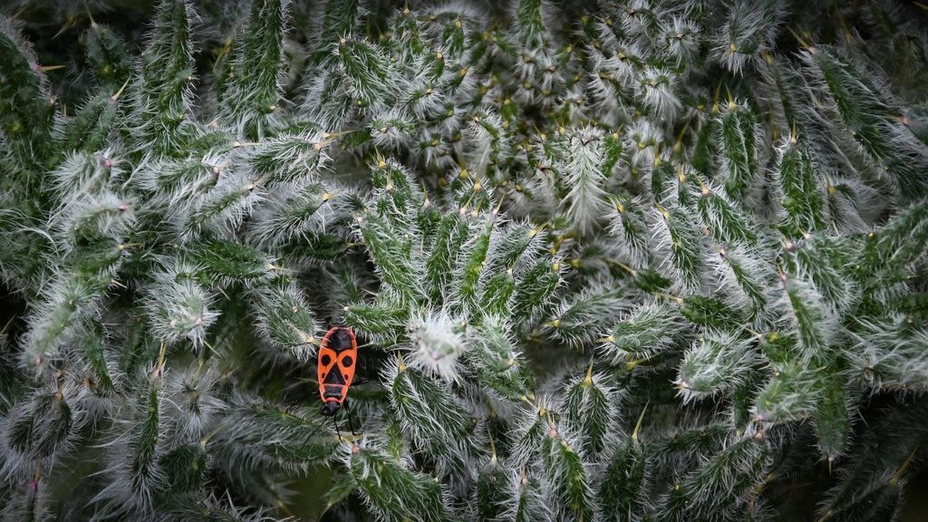 Keep your Christas tree pest free during the holiday season