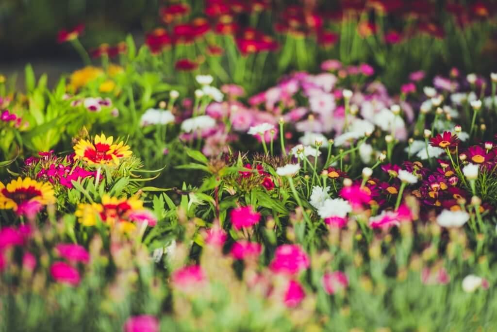 Colorful garden flowers with color schemes can help with creating a beautiful garden.