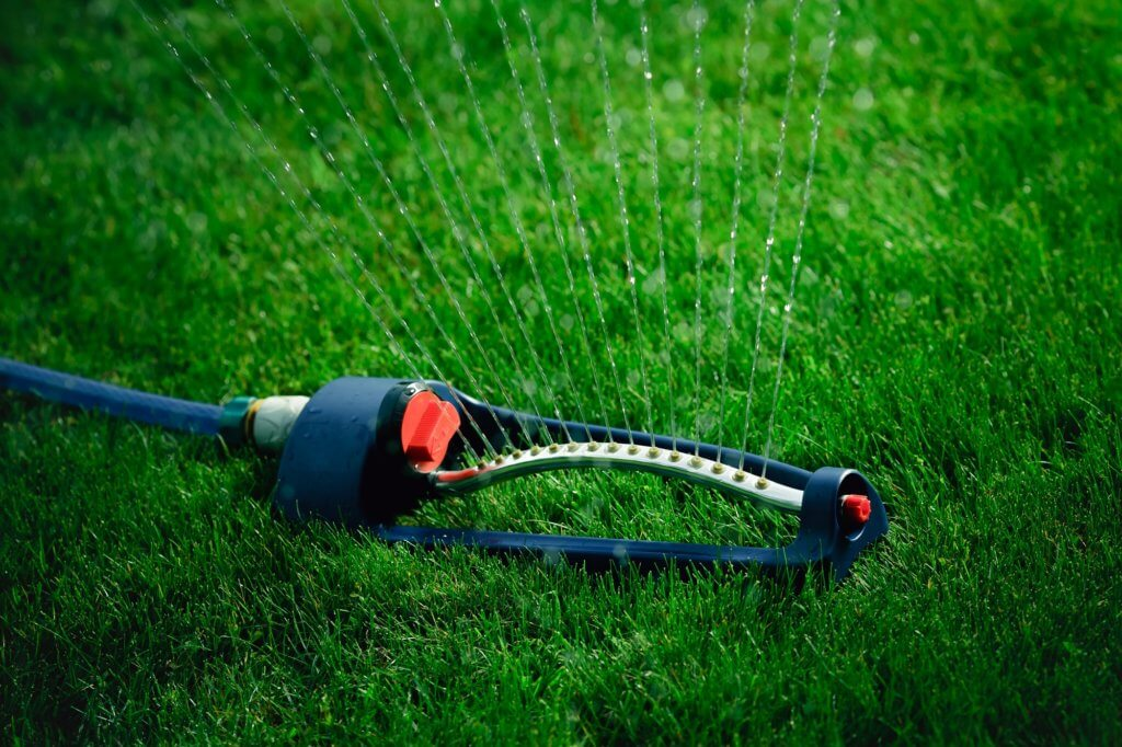 Proper watering will help keep your grass avoid pests that feed on dry grass