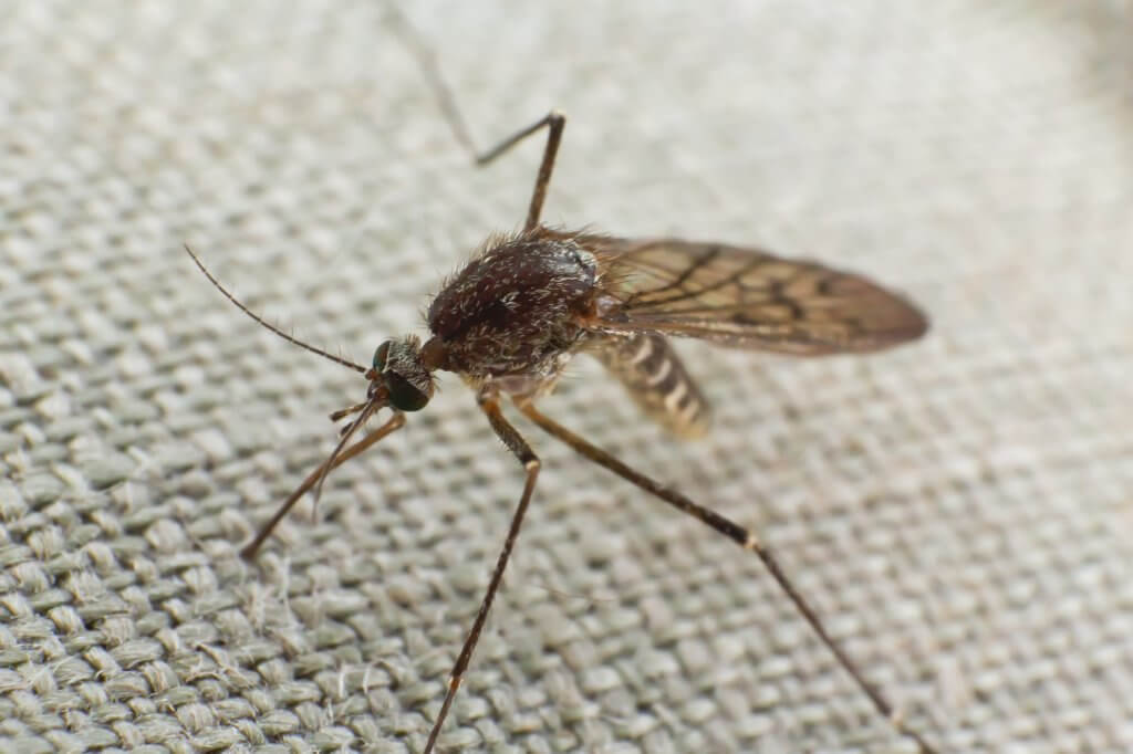 Mosquito-Borne Diseases In Humans