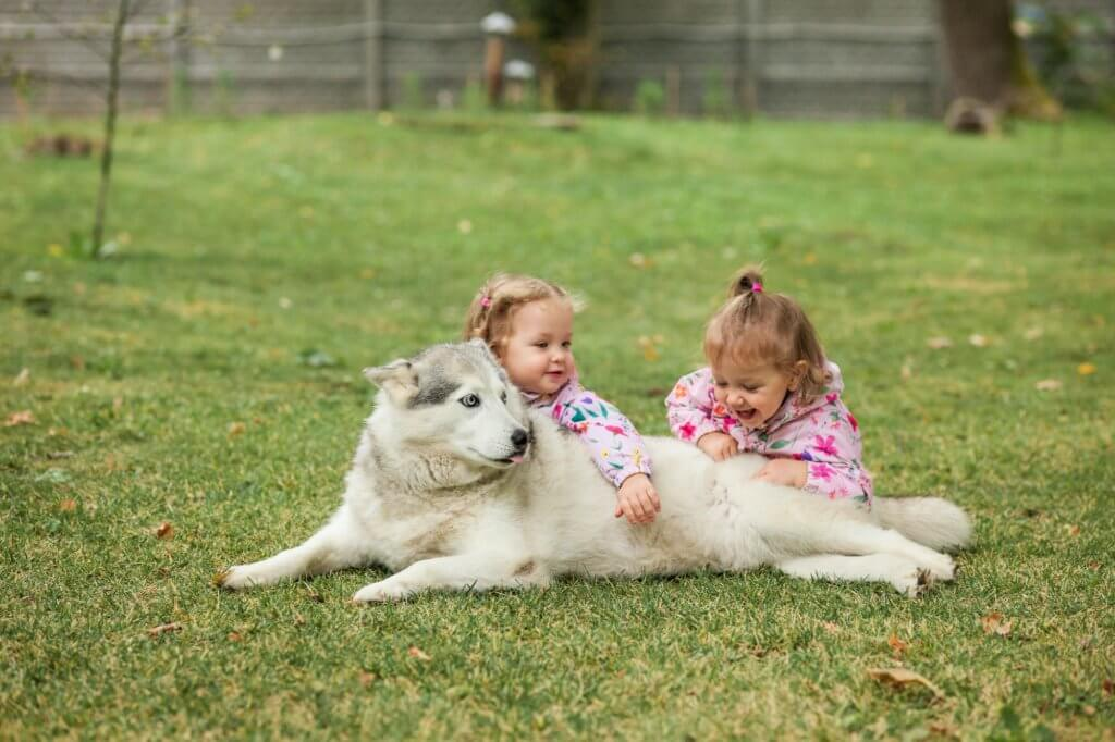 Kids playing with their dog in their green yard.