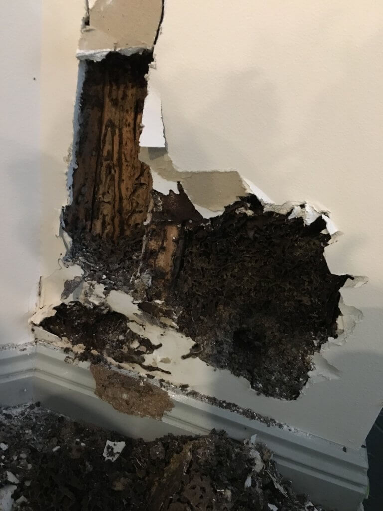 insurance coverage for pest-related damage.