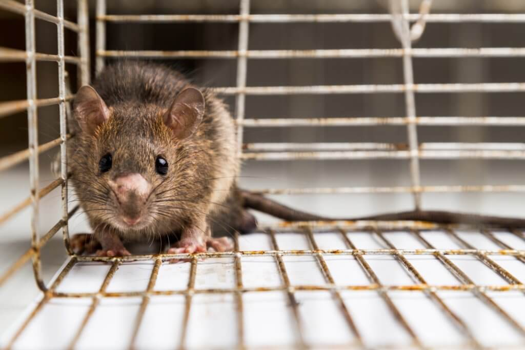 Follow These Tips To Keep Rodents And Bugs Out Of Your Storage Unit