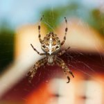 What Attracts Spiders in the House