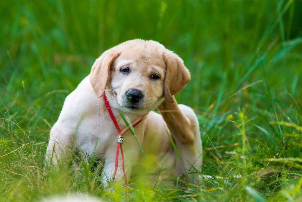 Vet Safety Tips On Flea And Tick Products