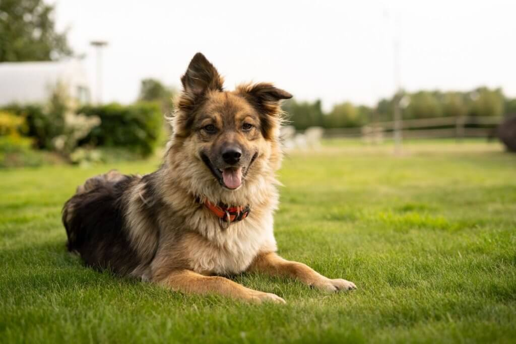 Why You Should Be Alert For Fleas & Ticks